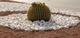 Cactus in a flower bed Stock Photos