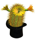 Cactus flower in cylinder. 3d rendering of a cactus in cylinder as an illustration Stock Photos