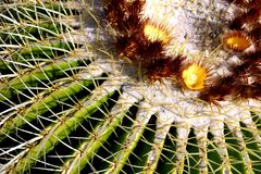 Cactus/flower detail. A closeup of a flowering cactus Stock Photos