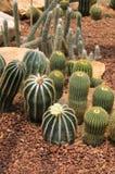 Cactus and flower. In a garden stock photos