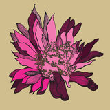 Cactus flower, hand-drawing. vector illustration. Royalty Free Stock Images