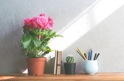 cactus flower , pink flower with notebook on office wood table m Royalty Free Stock Images