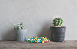 cactus flower with pins on wood Wall Shelves modern interior and Royalty Free Stock Photos