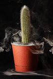 Cactus in a flower pot on a black background.  stock photography