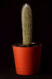 Cactus in a flower pot on a black background.  royalty free stock photography