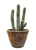 Cactus in flower pot isolated Royalty Free Stock Photos