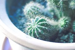 Cactus in flower pot royalty free stock images