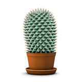 Cactus in a flower pot on a white background Stock Image