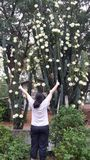 Cactus Flower royalty free stock image