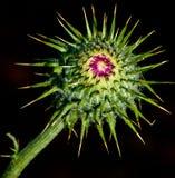 Cactus Flower Stock Photography