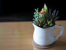 Cactus flower in white cup. Close up of cactus flower,Mammillaria Shumanni, Shlumbergera, hyacinths in the white cup, on wooden table, Soft Focus Royalty Free Stock Photo