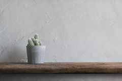 cactus flower on wood Wall Shelves modern interior background co Royalty Free Stock Photography
