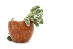 Cactus in a Flowerpot Royalty Free Stock Image