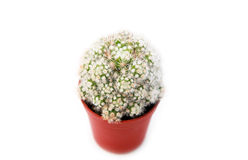 Cactus in flowerpot Royalty Free Stock Photos