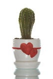 Cactus in flowerpot with Stock Image