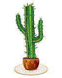 Cactus in flowerpot. Vector illustration of cactus in flowerpot Royalty Free Stock Photos