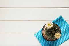 Cactus in flowerpot. On white wood table floor royalty free stock photos
