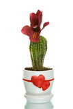 Cactus in flowerpot with heart shapes Royalty Free Stock Photography