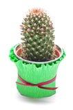 Cactus in the flowerpot Stock Photo