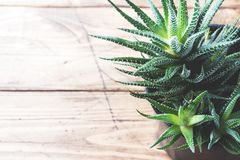 Cactus in flowerpot on wooden background. Selective focus. Copy space.  royalty free stock images
