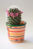 Cactus with flowers Royalty Free Stock Images