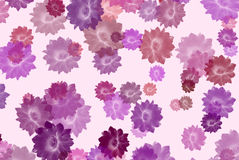 Cactus flowers background Royalty Free Stock Image
