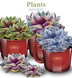 Cactus flowers background Vector. Plant growing in red pots. Cactus flowers background Vector. Plant growing in red pot vector illustration