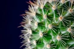 Cactus, fondo azul Imagenes de archivo