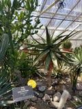 Cactus a forma di stella fotografia stock libera da diritti