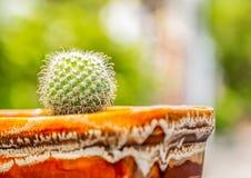Cactus formado globo Imagen de archivo libre de regalías