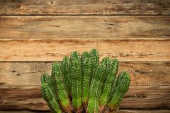 Cactus frame for Title or caption. Cactus themed background for caption, concept. Beautiful green cacti in the foreground with very nice rustic wooden background stock photo