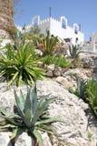 Cactus of Frigliana. Botanical landscape Stock Photos