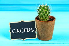 Cactus in front of classroom chalk board. Back to school concept with copy space. Cactus in front of classroom chalk board. Back to school concept with copy royalty free stock image