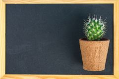 Cactus in front of classroom chalk board. Back to school concept with copy space. Cactus in front of classroom chalk board. Back to school concept with copy royalty free stock photos