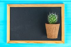 Cactus in front of classroom chalk board. Back to school concept with copy space. Cactus in front of classroom chalk board. Back to school concept with copy stock images