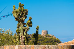 Cactus in front of medicean view including old castle. Cactus in front of medicean including old castle stock photos