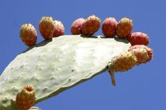 cactus fruit pear prickly Стоковые Фото
