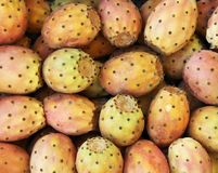 Cactus Fruit Texture Royalty Free Stock Image