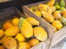 Cactus fruits in crate Stock Image