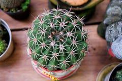 Cactus fuerte fotografía de archivo libre de regalías