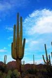 Cactus géant de Saguaro au paysage de parc national Photographie stock libre de droits