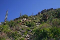 Cactus géant de Saguaro, stationnement national de Saguaro Photos libres de droits