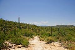 Cactus géant de Saguaro, stationnement national de Saguaro Image stock