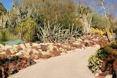 Free Cactus Garden 1 Stock Photos - 4318813