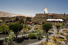 Cactus Garden. This cactus garden can be found on the Canary isle of Lanzarote. It is designed by a famous architect César Manrique who died in 1992. It royalty free stock images