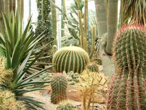 Cactus Garden Royalty Free Stock Photos