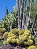 Cactus Garden Royalty Free Stock Image