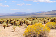 Cactus Garden Stock Photography