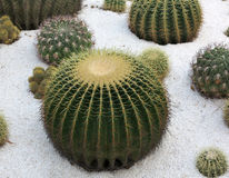 Cactus Garden Stock Photos