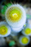 Cactus in the garden royalty free stock photography